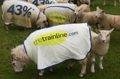 Thetrainline.com bolsters its team