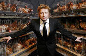 'Jamie's Fowl Dinners': documentary on battery farming