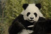 Just Eat: a panda gets a positive result in a pregnancy test