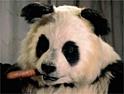 Knorr: return of the panda