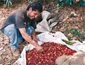 Kraft: launching fair trade coffee