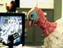 Peta: turkey ad
