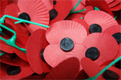 Poppy appeal: entering new spaces
