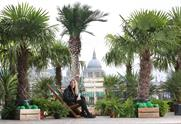 In pictures: Vita Coco's palm tree forest