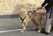 On film: Cheetah at Louise Blouin Foundation