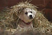 Budweiser: 'Lost Dog' Super Bowl campaign.