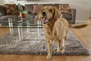 Dog fever: What happens when Amazon unexpectedly posts your product on Facebook