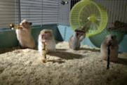 Drench 'the clever hamsters' by CHI & Partners
