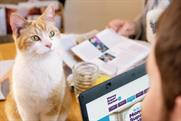 """Moneysupermarket.com """"running with cats"""" by Mother"""