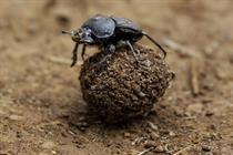 What event planners can learn from dung beetles