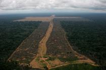 Greenpeace accuses high-profile brands of profiting from deforestation