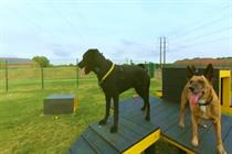 Dogs Trust offers behind-the-scenes access to its centres with VR