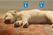 Proximity London and MC&C capture Guide Dogs