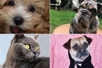 The Lists 2020: Top 10 pets of adland