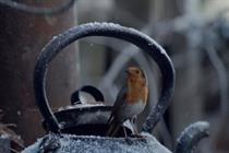 Waitrose Christmas ad depicts robin's epic journey home