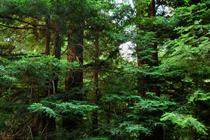 Green Apple: tech brand buys city-sized forest in conservation push