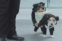 Gocompare.com puts £28 million ad brief up for pitch