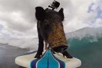 Hottest virals: GoPro's surfing pig rules the waves, plus Apple and Nike