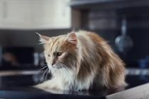 O2 to drop cat from evolved 'Be more dog' concept
