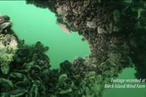 VIDEO: Fish thrive at first US project
