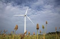 Suzlon wins 500MW order for auctioned projects