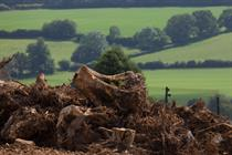 Lords vote for limits to habitats assessment rule changes and greater ancient woodland  planning protection in new Environment Bill amendments