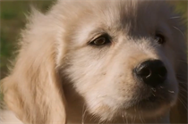 GoDaddy: Super Bowl puppy ad was no PR stunt