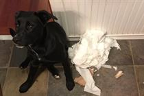 Cottonelle, Scott, and WeRateDogs team up to celebrate toilet paper and dogs