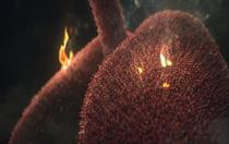 Ad Council fights lung cancer with 'Saved By The Scan' campaign