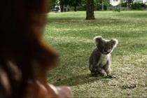 Specsavers 'koala' by Specsavers Creative