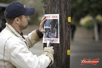 """Budweiser """"lost dog"""" by Anomaly"""