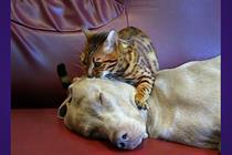 "Cadbury Dairy Milk ""cat and dog"" by Fallon London"
