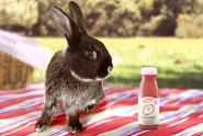 Innocent 'rabbits' by Fallon