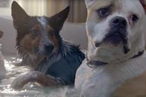 Dogs flood a room to synchronize swim for Farmers Insurance