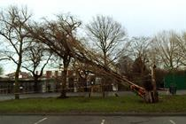 Checkatrade to promote 24-hour emergency call-out to local tree surgeons