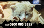 RSPCA 'I'm an animal help me' by Bright