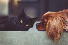 Major animal charities plan closer working in order to save funds