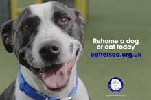Battersea Dogs & Cats Home battles Instagram-driven designer breed trend