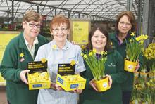 Business partner: Marie Curie Cancer Care and the Garden Centre Group