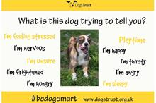 Digital Campaign of the Week: Dogs Trust helps children stay safe