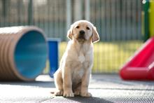 Income at Guide Dogs reaches record high