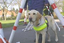 Investment in 'cheaper TV advertising' helps Guide Dogs' income hit new high