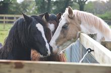 Redwings Horse Sanctuary merges with another equine welfare charity