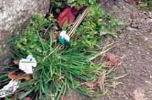 MHort student seeks head gardeners' alternative weed control information