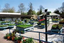 National Trust Lanhydrock peat-free nursery under threat of closure