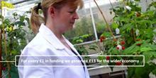 Podcast details new raspberry breeding at James Hutton