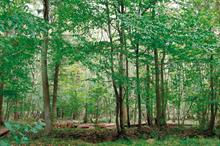 Investment in homegrown tree and plant stocks can help replenish UK's woodlands