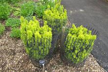 How are supply chain shortages impacting garden designers?