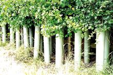 How to buy - Tree guards and shelters