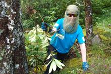 More than 40 hectares of invasive species cleared at heritage sites across Scotland